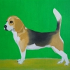 354 Beagle Luna