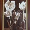 245 Tulpen 2