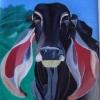 256 Indubrasil koe