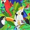 304 Count the Birds of Brasil